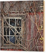 Tangled Up In Time Wood Print by Lois Bryan