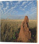 Termite Mound In Cerrado Grassland Emas Wood Print by Tui De Roy