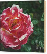 Texas Centennial Rose Wood Print by M Valeriano