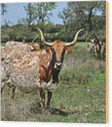 Texas Longhorns Wood Print by Christine Till