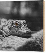 The Alligator's Eying You Wood Print by Linda Leeming