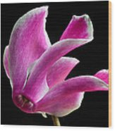 The Art Of Cyclamen Wood Print by Terence Davis