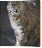 The Bobcat Wood Print by Saija  Lehtonen