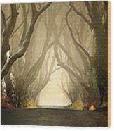 The Dark Hedges 2011 Wood Print by Pawel Klarecki