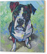 The Dog Wood Print by Ellen Marcus