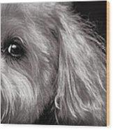 The Dog Next Door Wood Print by Bob Orsillo