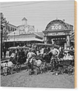 The Goat Carriages Coney Island 1900 Wood Print by Steve K