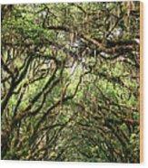 The Green Mile Savannah Ga Wood Print by William Dey