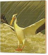 The Pelican Lands Wood Print by Jeff Swan