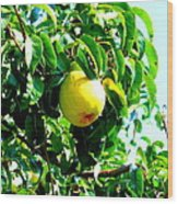 The Ripe Pear Wood Print by Kay Gilley