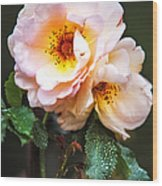 The Rose With Your Name. Park Of De Haar Castle Wood Print by Jenny Rainbow