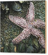 The Starfish  Wood Print by JC Findley