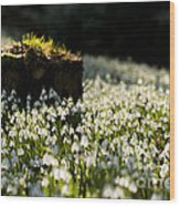 The Stump And The Snowdrops Wood Print by Anne Gilbert