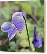 The Violet Wood Print by Susan Leggett