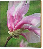 The Windblown Pink Magnolia - Flora - Tree - Spring - Garden Wood Print by Andee Design
