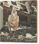There's  A Chicken In The Hen House Wood Print by Artist and Photographer Laura Wrede