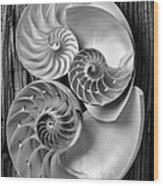 Three Chambered Nautilus In Black And White Wood Print by Garry Gay