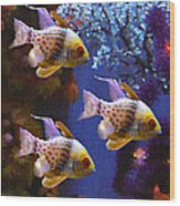 Three Pajama Cardinal Fish Wood Print by Amy Vangsgard