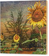 Three Sunflowers Wood Print by Adrian Evans