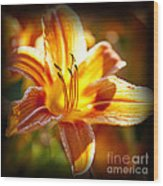 Tiger Lily Flower Wood Print by Elena Elisseeva