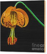 Tiger Lily Wood Print by Robert Bales