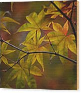 Tranquil Collage Wood Print by Mike Reid