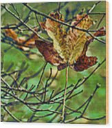 Trapped Wood Print by Bonnie Bruno