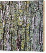 Tree Bark Detail Study Wood Print by Design Turnpike