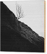 Tree In Mist II Wood Print by John Farnan