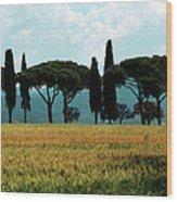 Tree Row In Tuscany Wood Print by Heiko Koehrer-Wagner