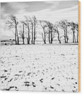 Trees In Snow Scotland Iv Wood Print by John Farnan