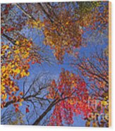Treetops In Fall Forest Wood Print by Elena Elisseeva