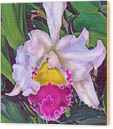 Tropical Orchid Wood Print by Jane Schnetlage