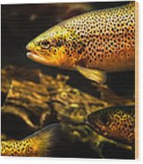 Trout Swiming In A River Wood Print by Bob Orsillo