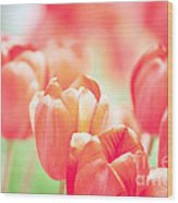 Tulips In The Sun Wood Print by Kay Pickens