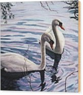 Two Swans A Swimming Wood Print by Sandra Chase