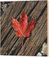 Uniquely Red Wood Print by Pamela Baker