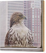 Urban Red-tailed Hawk Wood Print by Rona Black