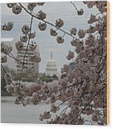 Us Capitol - Cherry Blossoms - Washington Dc - 01132 Wood Print by DC Photographer