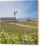 Vineyard With Young Vines Wood Print by Susan Schmitz