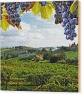 Vineyards In San Gimignano Italy Wood Print by Susan Schmitz