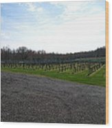 Vineyards In Va - 121267 Wood Print by DC Photographer