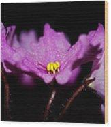 Violet Prayers Wood Print by Lisa Knechtel