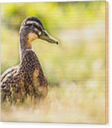 Warm Summer Morning And A Duck Wood Print by Bob Orsillo
