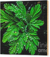 Water Drops Wood Print by Robert Bales