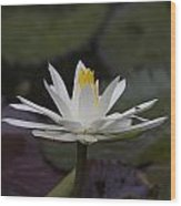 Water Lilly7 Wood Print by Charles Warren