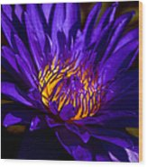 Water Lily 7 Wood Print by Julie Palencia