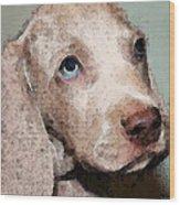 Weimaraner Dog Art - Forgive Me Wood Print by Sharon Cummings
