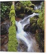 Wet And Green Wood Print by Steven Milner