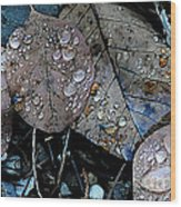 Wet Leaves Wood Print by Artist and Photographer Laura Wrede